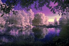 Violet Reflection by ~serenitypictures