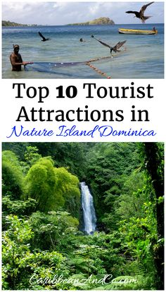 Dominica is known as The Nature Island of the Caribbean due to its spectacular, lush, and varied flora and fauna. With only 100,000 visitors each year, this Caribbean travel destination is a hidden gem waiting to be discovered. Check out our list of top 10 things to do in Dominica.