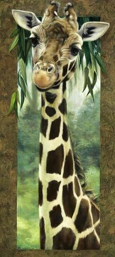 Giraffe #Wildlife #Nature #Photography