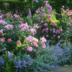 #rosegarden #gardenlover