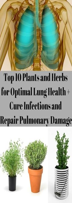 Top 10 Plants and Herbs for Optimal Lung Health + Cure Infections and Repair Pulmonary Damage | Healthy Life Magic