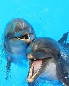 BLOG OBRAZKI: DELFINY Orcas, Beautiful Creatures, Animals Beautiful, Animals And Pets, Cute Animals, Strange Animals, The Ocean, Ocean Life, Fauna Marina
