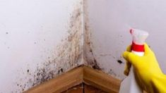 Our hoarding cleanup services include animal hoarding cleanup, gross filth cleaning, hazardous waste removal, recover valuables, sanitation and deep cleaning. Remove Mold From Walls, Get Rid Of Mold, Floor Molding, Wall Molding, Carpet Flooring, Mold And Mildew, Clean Up, David Bowie, Fungi