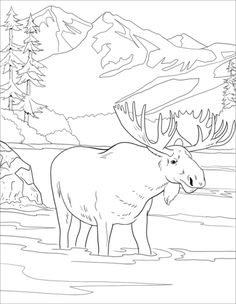 coloring page New coloring pages on Kids-n-Fun. These are the very latest coloring pages on Kids-n-Fun. At Kids-n-Fun you will always find the nicest coloring pages first! Moose Pictures, Pictures To Paint, Animal Coloring Pages, Coloring Book Pages, Animal Drawings, Art Drawings, Dandelion Drawing, Giraffe Colors, Black And White Art Drawing
