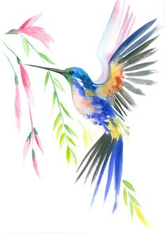 Birds of Paradise, Set of Watercolor print Watercolor animalism Painting Illustration, Poster and Wall decor Hummingbird Drawing, Watercolor Hummingbird, Watercolor Bird, Hummingbird Tattoo, Watercolor Landscape, Watercolour Painting, Art Colibri, Images Colibri, Bird Painting Acrylic