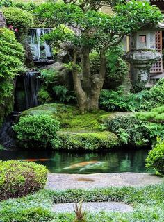 This is one of the most beautiful things I've ever seen....In a Japanese Garden