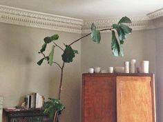 ceramics + plants