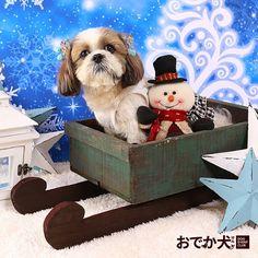 DECオリジナルセットで可愛く愛犬撮影会(*^_^*)! 『ハロウィン&クリスマス&戌年企画お正月撮影会』各地で開催中! 是非お気軽にご参加くださいね!  詳細はイベントカレンダーでチェック! http://www.doglife.info/event_calendar.php?evtype=2  #おでか犬 #愛犬フォト #ドッグイベントクラブ #愛犬撮影 #愛犬 #ハロウィン #クリスマス #年賀状