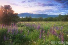 2014 New England Flower Shows & Festivals
