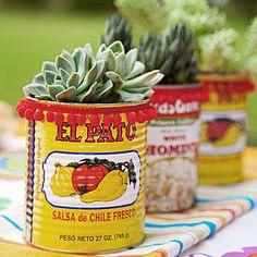 Cinco de Mayo party: Let sweet succulents be the star of the kids table by replanting them in festively colored recycled cans.