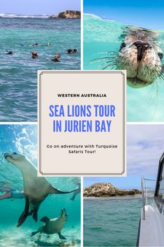 The Sea Lion tours Jurien Bay is the adventure to experience with Turquoise Safari Tours when craving an underwater safari in Western Australia. Australia Tours, Australia Travel, Western Australia, Queensland Australia, Safari Outfits, Safari Costume, New Zealand Beach, Australian Road Trip, Ocean Photography