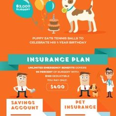 Find out everything you need to know about pet insurance using this beautiful infographic. Updated in 2016 with facts, statistics, data and funny, ado