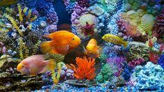 aquarium fish corals hd wallpapers download