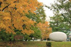 Autumn in Hokkaido, Japan
