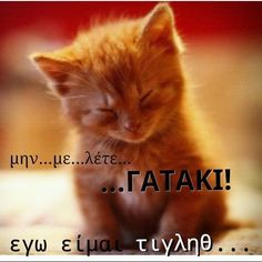 greek quotes on we heart it Late Birthday Wishes, Motion Activated Sprinkler, Keep Cats Away, Things That Bounce, Things To Come, Greek Quotes, Doberman, Cat Breeds, We Heart It