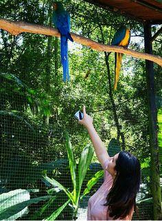 Parque nacional das aves- Foz do Iguaçu