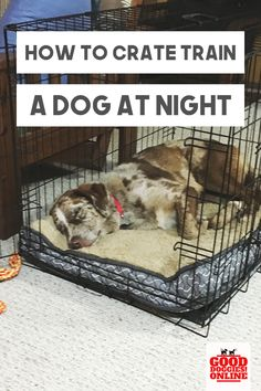 How to Crate Train a Dog at Night - Good Doggies Online - How to crate train a dog at night. Check out these crate training tips for your dog or puppy. Puppy Training Tips, Training Your Dog, Kennel Training A Puppy, Training Pads, Potty Training, Dog Crate Training, Cesar Millan Puppy Training, Leash Training, Training Collar