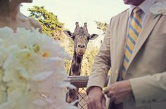 Where else but the Zoo can you get a picture like this on your special day?    Credit: A CUP OF JO: Zoo wedding, Photographer Max Wanger