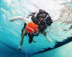 Underwater Dogs 2013 Calendar by Seth Casteel.