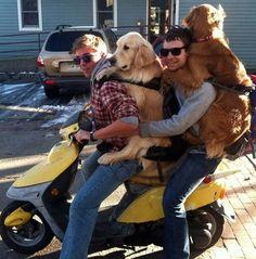 Com uma alça da mochila, os rapazes prenderam os cachorros em cima da scooter (será que os cães gostaram do passeio?)Saiba tudo sobre carros! Acessewww.r7.com/carros