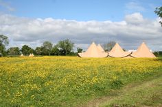 Wedding meadow tipis