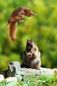 Hiya! Ninja squirrel