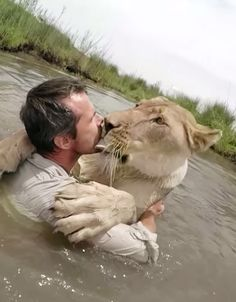 Animals Discover 7 Yrs After Rescuing 7 Yrs After Rescuing Lioness He Sees Her Again. She Pounces In Jaw-Dropping Reunion. Pretty Cats Beautiful Cats Animals Beautiful Lion Love Cat Love Animals And Pets Funny Animals Cute Animals Big Cats Pretty Cats, Beautiful Cats, Animals Beautiful, Lion Love, Cat Love, Animals And Pets, Funny Animals, Cute Animals, Big Cats
