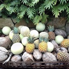 Melons + Pineapples + Coconuts || photo @traceaberry