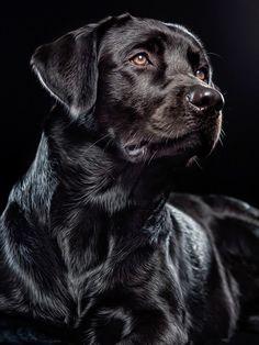 10 Amazing Dog Training Tips