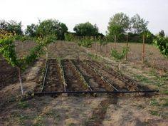 instalatie initiala Railroad Tracks, Vineyard, Solar, Outdoor, Plant, Outdoors, Vine Yard, Vineyard Vines, Outdoor Games