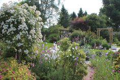 Creer un massif avec de la lavande recherche google entre piscine et terrasse pinterest - Massif fleuri toute l annee ...