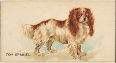 Issued by Goodwin & Company. Toy Spaniel, from the Dogs of the World series for Old Judge Cigarettes, 1890. The Metropolitan Museum of Art, New York. The Jefferson R. Burdick Collection, Gift of Jefferson R. Burdick (63.350.214.163.43)