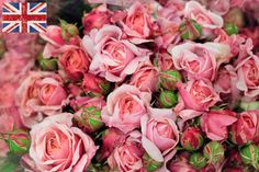 Bitish pink spray roses at New Covent Garden Flower Market - July 2014