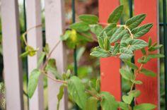 Idée pour habiller un grillage par Slowgarden / fence decoration by Slowgarden.