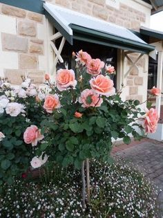 Pink Roses via Tracey B