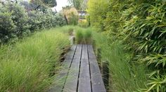 Path Garden by Greencare
