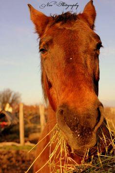 Nico Photography ( Eniko Molnar) #horse