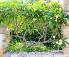 It's all about choosing the right plants for the right spots, as this thriving garden on Sydney Harbour demonstrates Tropical Backyard Landscaping, Landscaping Plants, Backyard Ideas, Flower Landscape, Garden Landscape Design, Landscape Architecture, Side Garden, Garden Beds, Terrace Garden