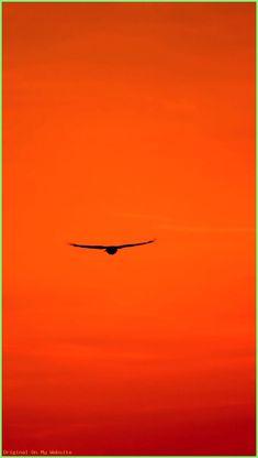 Wallpaper Backgrounds Aesthetic - Wallpaper SKY: Sunset, Scenic, Buzzard, Red Sky, Predator - Wallpapers World Orange Aesthetic, Sky Aesthetic, Aesthetic Colors, Aesthetic Pictures, Rainbow Aesthetic, Orange Walls, Light Orange, Orange Twist, Moon Art