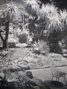 Palm Springs 1963