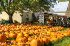 This is Weston Farms near Evans Notch in Fryeburg, Maine. 9/21/2013