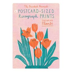 A packet of 6 Risograph prints, the size of postcards, all featuring cheery plants and flowers. Frame them or send one as snail mail to cheer up a pal. Designed by Louise Lockhart and printed in Manchester Illustration Blume, Cute Illustration, Postcard Printing, Hand Drawn Lettering, Floral Illustrations, Postcard Size, Vintage Posters, Screen Printing, Art Prints
