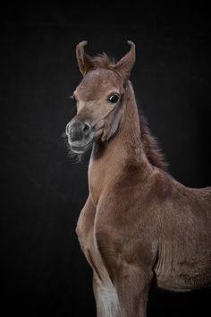 Pretty foal by Robert Peek Fotografie