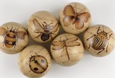 Ceramic balls with antique insect sketches. $19 for set of 6