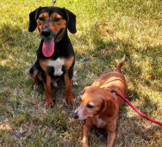 Rocky & copper found their forever home!