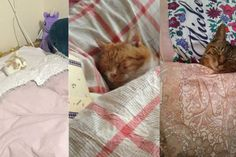 Cats cosily tucked into bed is the viral trend we need today Neko Atsume, Viral Trend, We Need, Cuddling, Cute Cats, Cute Pictures, Cat Lovers, Digital Marketing, Bed