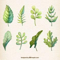 Coleção folha Watercolour Vetor grátis