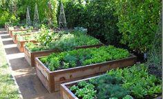 Záhony pěkně v řadě vypadají vážně dobře. Mezi každým z nich je cestička, aby zahradník dosáhl na každé místo záhonu.