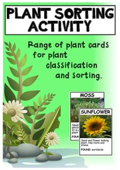 Plant sorting and classifying cards - science activity - Plants - Tierwelt Fourth Grade Science, Primary Science, Middle School Science, Science Classroom, Science For Kids, Classroom Ideas, Plant Science, Science Biology, Teaching Science