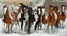 Rodeo Stock. Summit County, Utah.